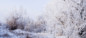 winter-wardrobe-landscape
